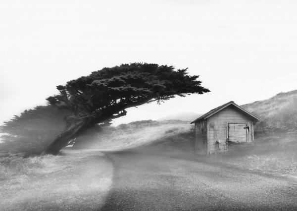 Silent Mist Point Reyes California